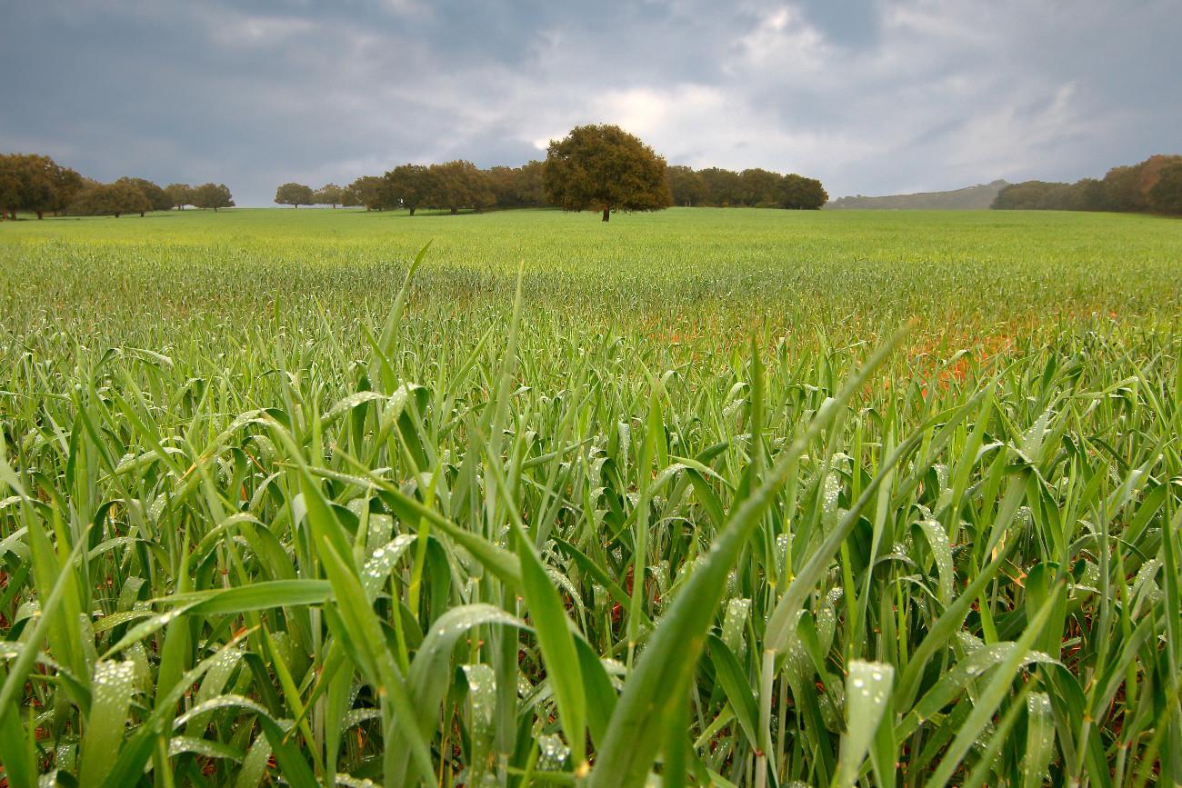 Fotografo marbella prado verde paisajes lugares - Fotografo marbella ...