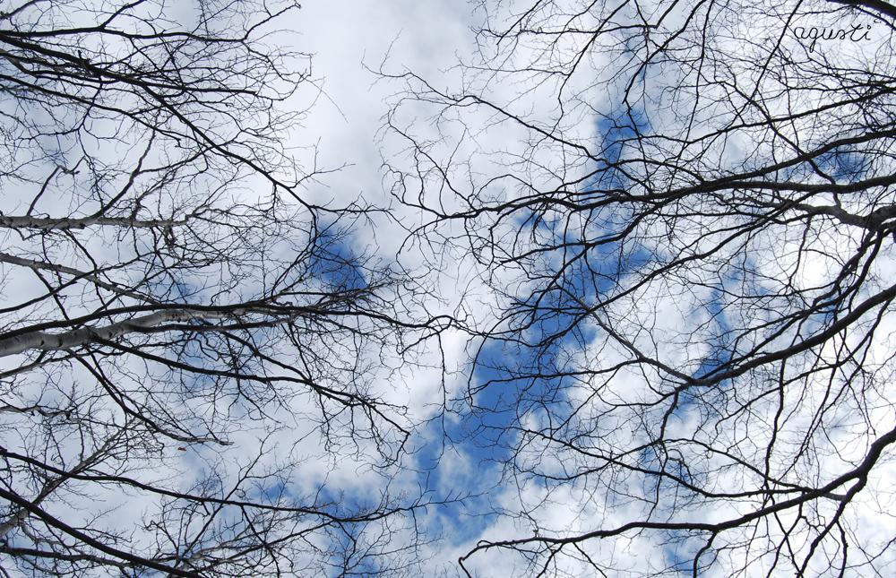 Bosc d'hivern - Selecció - fotografies de natura i paisatge de Catalunya - agusti2 - les millors