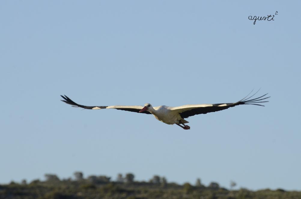 Cigonya - Nonasp (la franja de ponent) - Selecció - fotografies de natura i paisatge de Catalunya - agusti2 - les millors