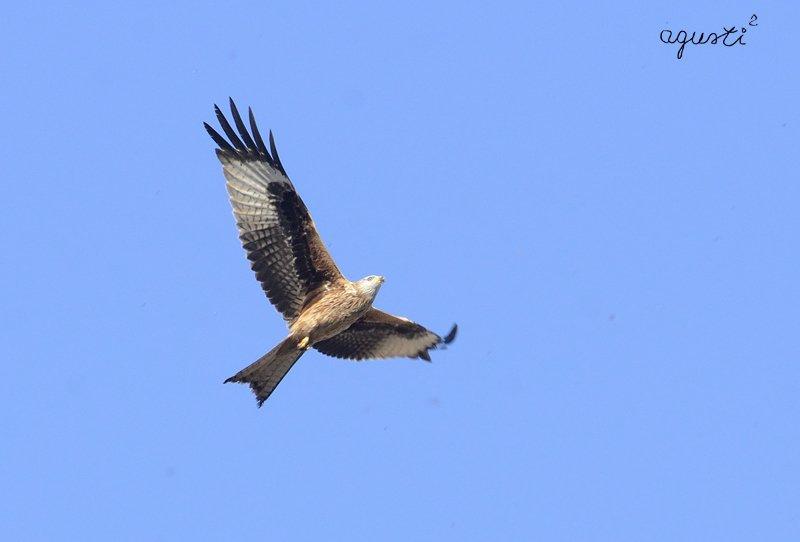 Selecció - fotografies de natura i paisatge de Catalunya - agusti2 - les millors