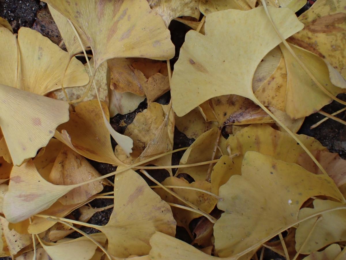 PARC DE NARA – NARA – JAPÓ  - JAPÓ - COLORS DE TARDOR - agusti lopez rodriguez i agusti meseguer altes, Fotografía entorn natural