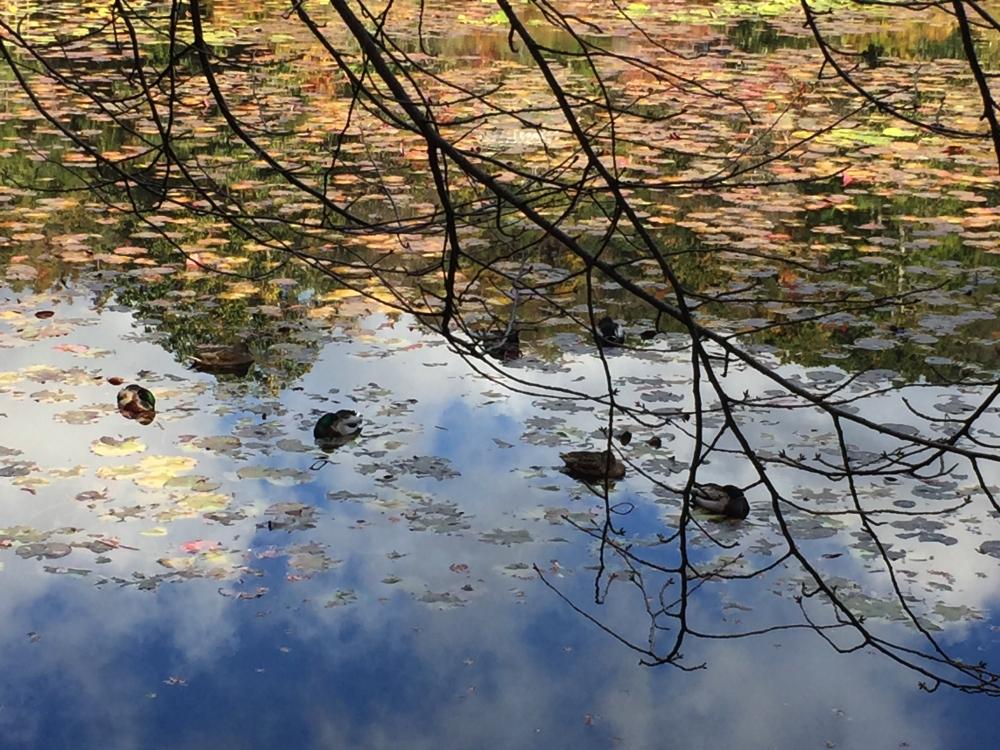 TEMPLE DAITOKUJI – KIOTO – JAPÓ - JAPÓ - COLORS DE TARDOR - agusti lopez rodriguez i agusti meseguer altes, Fotografía entorn natural