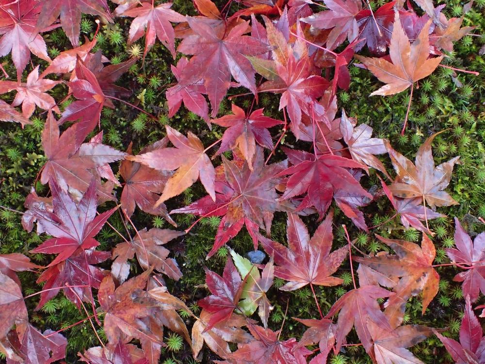 TEMPLE KINKAKU-JI - KIOTO – JAPÓ - JAPÓ - COLORS DE TARDOR - agusti lopez rodriguez i agusti meseguer altes, Fotografía entorn natural
