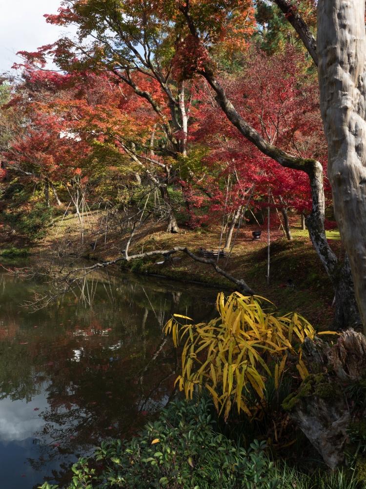 TEMPLE DE KIYOMIZU-DERA  – KIOTO – JAPÓ - JAPÓ - COLORS DE TARDOR - agusti lopez rodriguez i agusti meseguer altes, Fotografía entorn natural