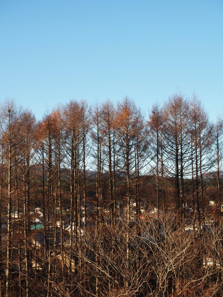 KAWAGUCHIKO – ALPS JAPONESOS – JAPÓ - JAPÓ - COLORS DE TARDOR - agusti lopez rodriguez i agusti meseguer altes, Fotografía entorn natural