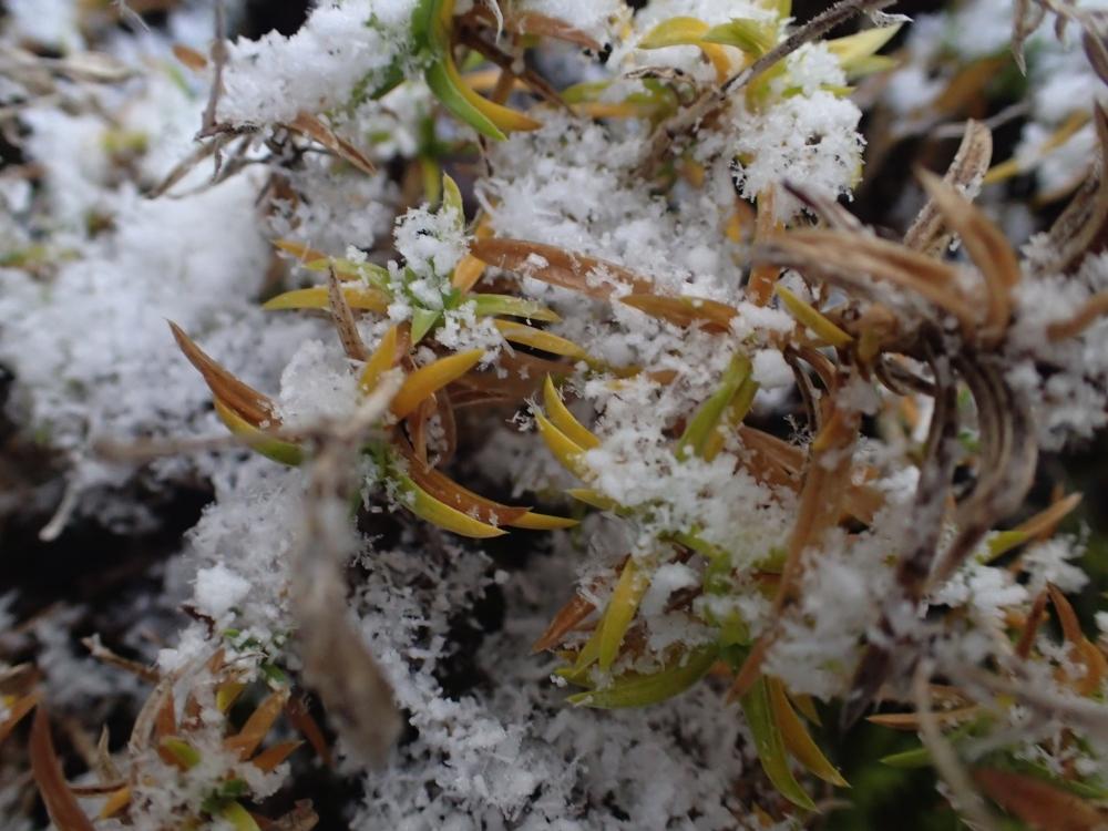 OKUHIDA – ALPS JAPONESOS – JAPÓ - JAPÓ - COLORS DE TARDOR - agusti lopez rodriguez i agusti meseguer altes, Fotografía entorn natural