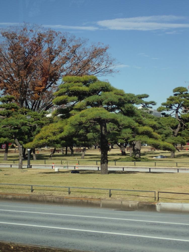 JARDINS DEL PALAU IMPERIAL – TOQUIO – JAPÓ - JAPÓ - COLORS DE TARDOR - agusti lopez rodriguez i agusti meseguer altes, Fotografía entorn natural
