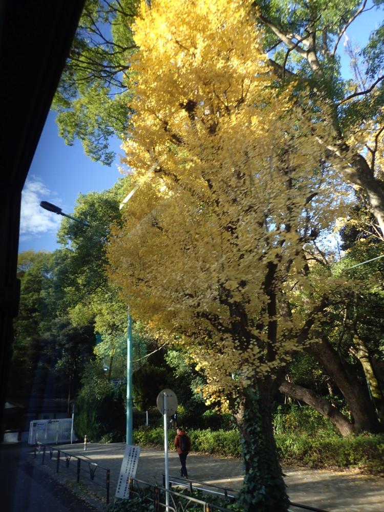 SANTUARI MEIJI – TOQUIO – JAPÓ - JAPÓ - COLORS DE TARDOR - agusti lopez rodriguez i agusti meseguer altes, Fotografía entorn natural