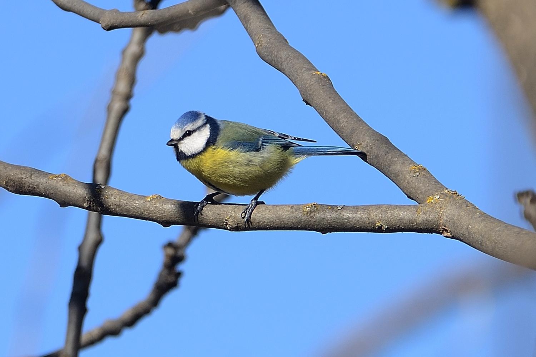 OCELL - BELLVER DE CERDANYA - GIRONA - CATALUNYA - Selecció - fotografies de natura i paisatge de Catalunya - agusti2 - les millors