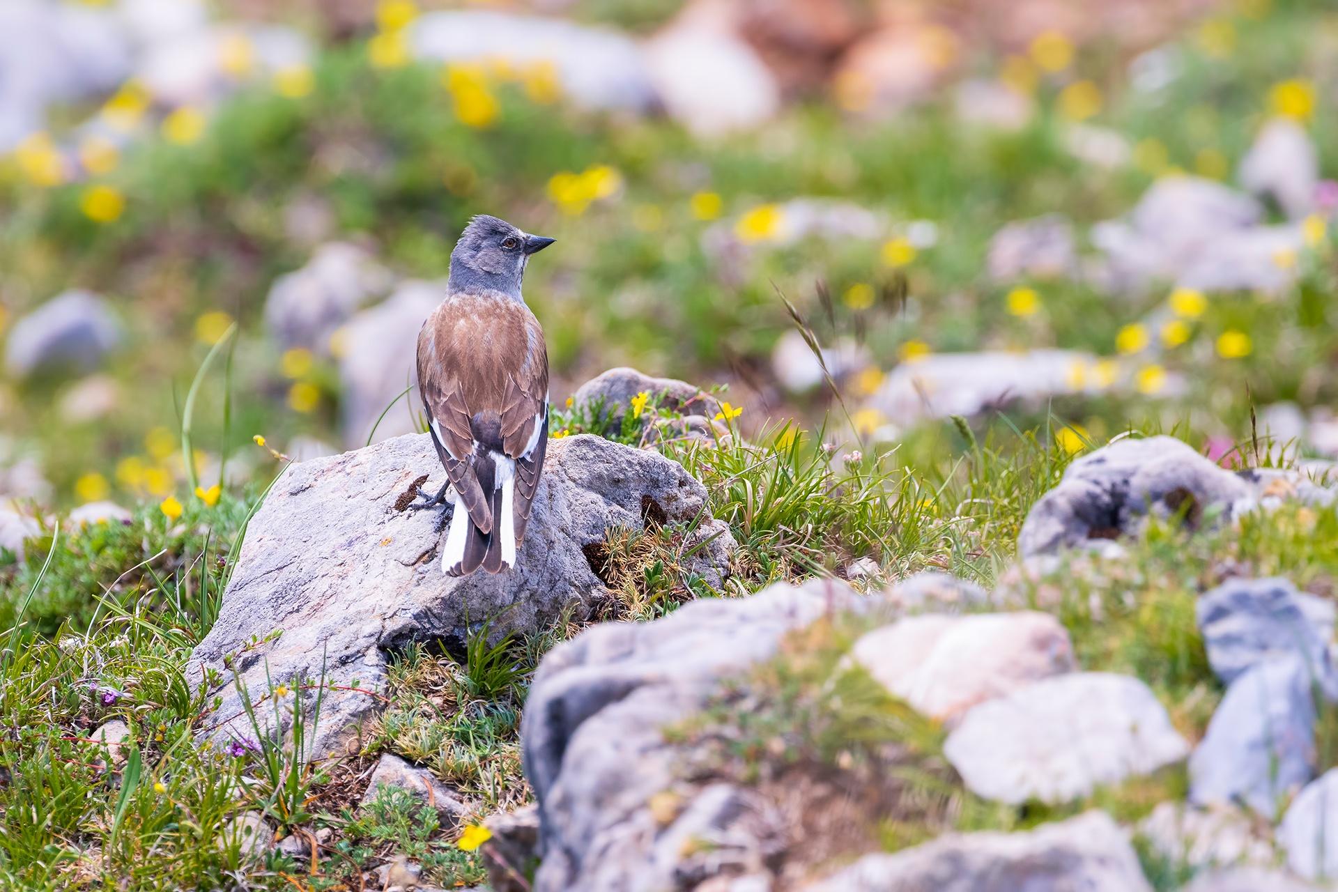 Inicio - AFONAS, Asociación de Fotografos de Naturaleza de Asturias