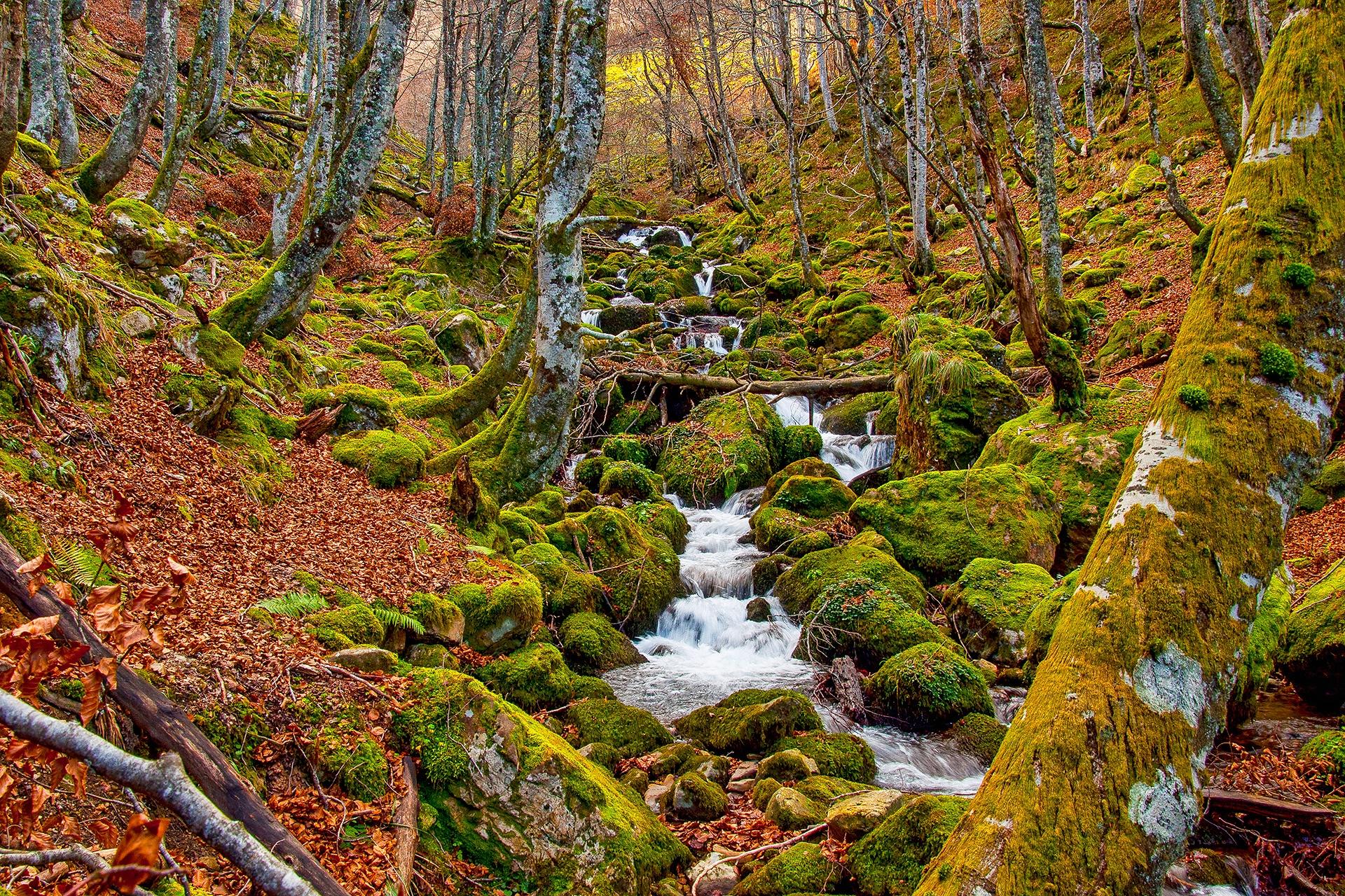 Daniel Miranda Viescas - 2019 - AFONAS, Asociación de Fotografos de Naturaleza de Asturias