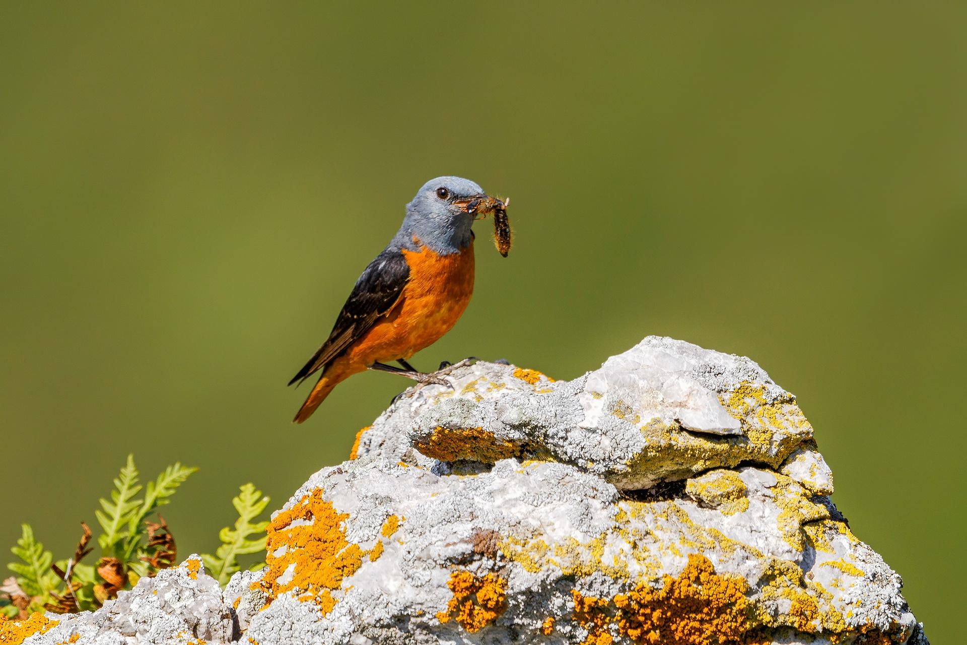 Josechu Fernández-Roquero Rojo - 2018 - AFONAS, Asociación de Fotografos de Naturaleza de Asturias