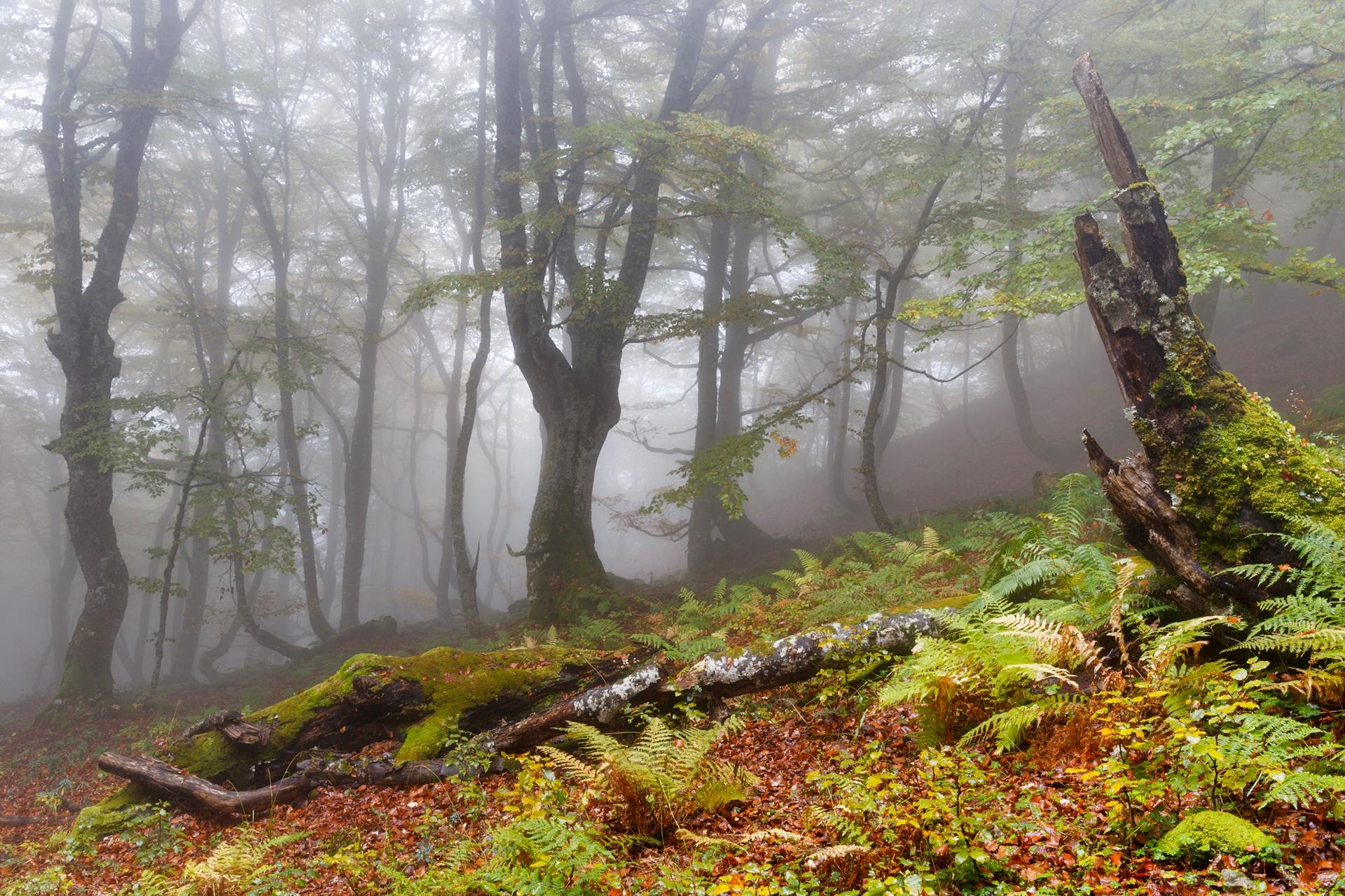 Alberto Palacio.Hayedo - 2018 - AFONAS, Asociación de Fotografos de Naturaleza de Asturias