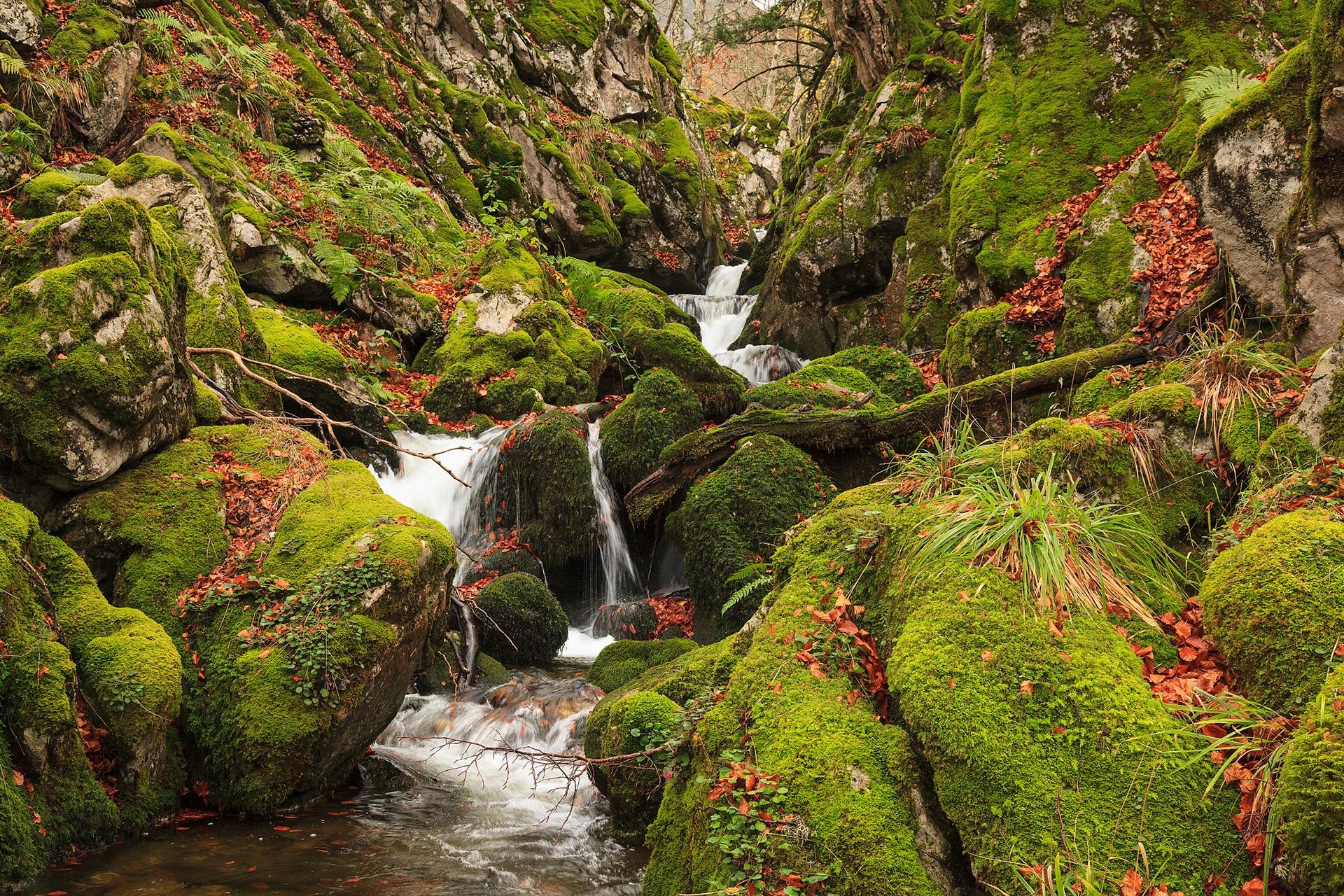 Julio César González Fernández-Donde el río nace - 2018 - AFONAS, Asociación de Fotografos de Naturaleza de Asturias