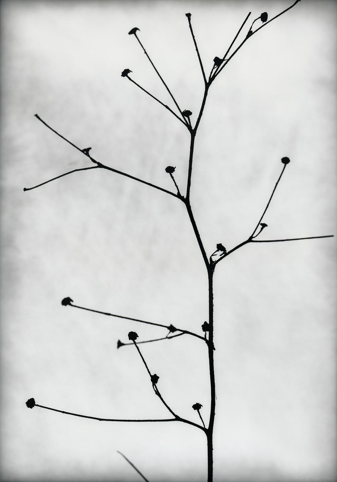 Intervalo lúcido. Consciencias del espacio (2020) - Ana Frechilla