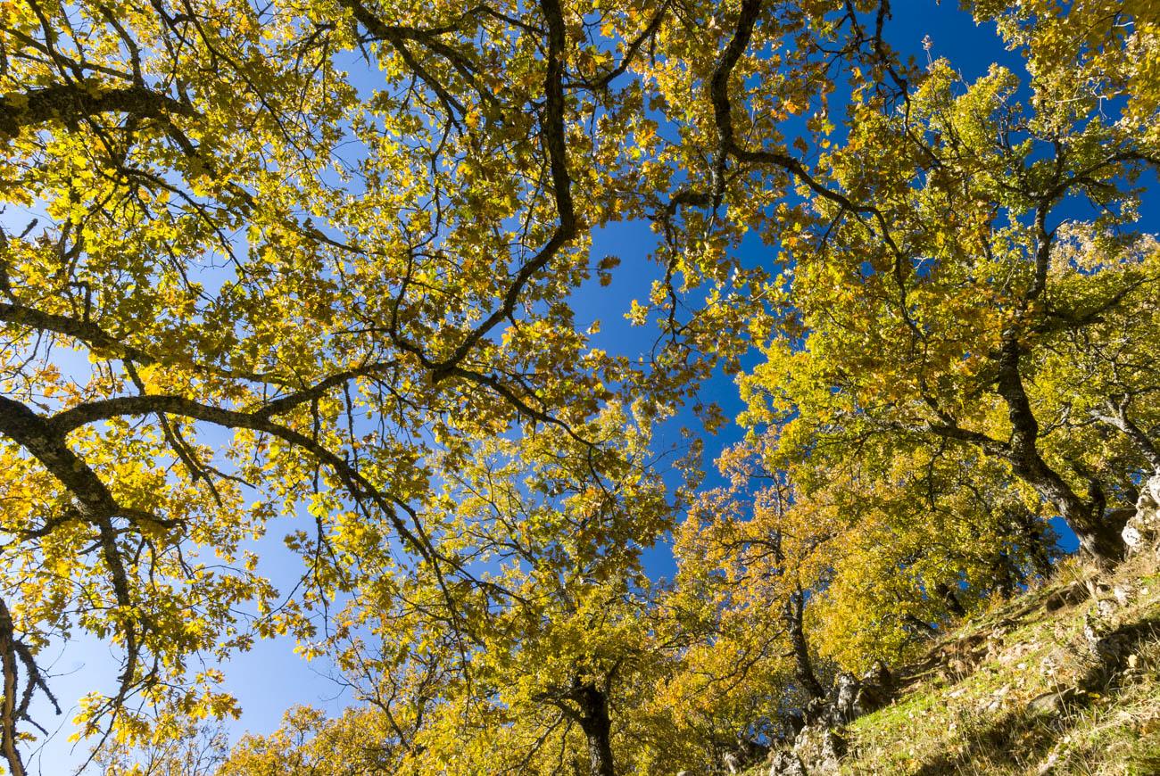 Árboles - Antonio Real, Fotografias de paisajes