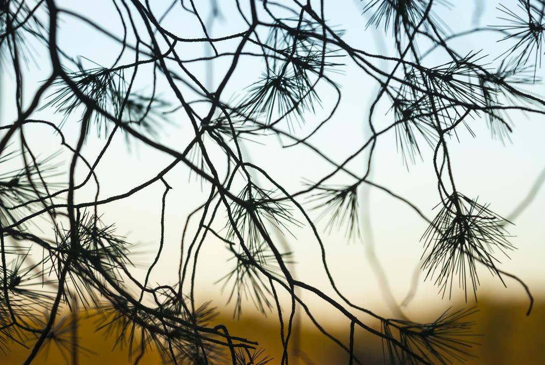 Desenfoques - Antonio Real, Fotografias de paisajes