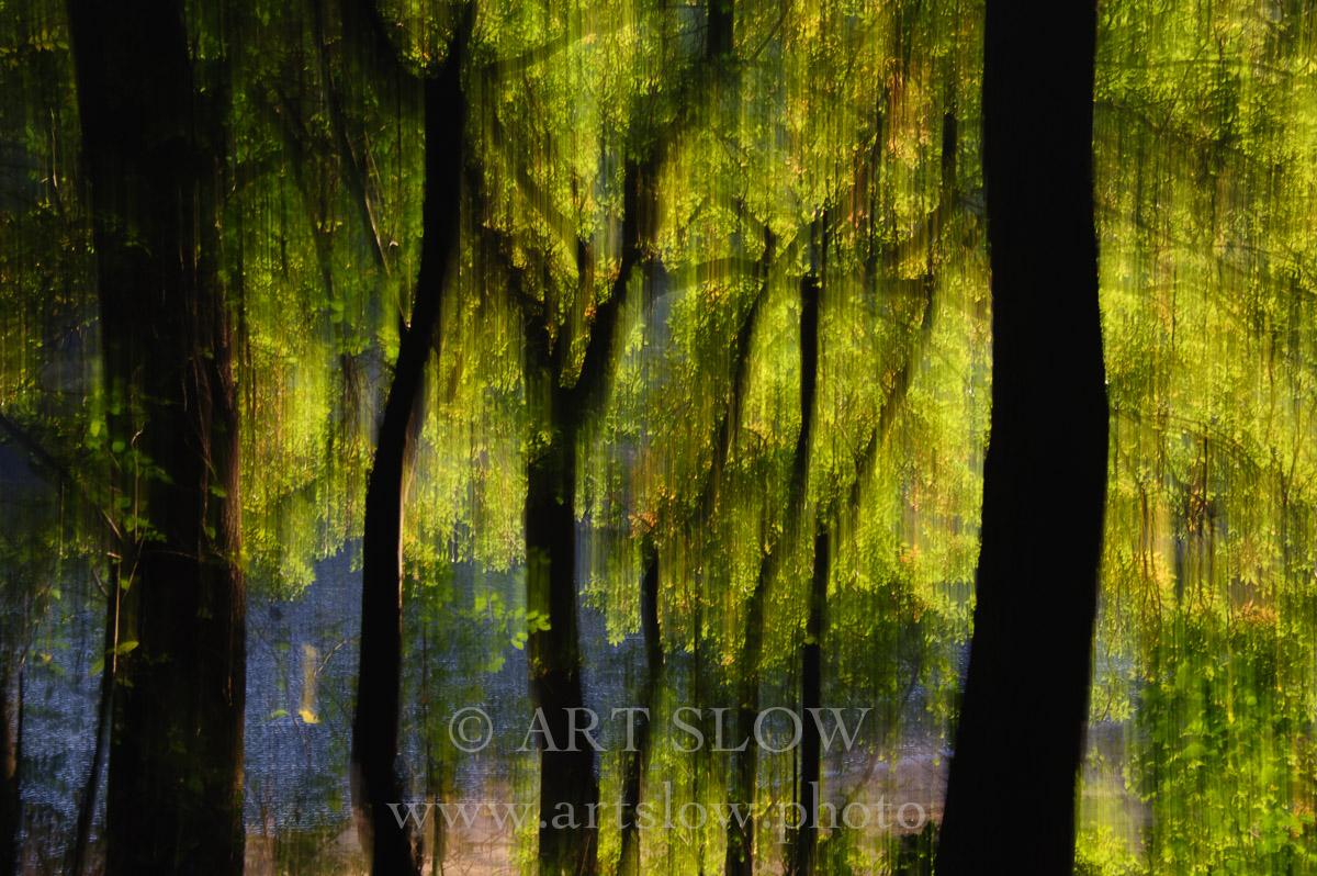 Lluvia Solar – Santa Fe, Parque Natural del Montseny, Catalunya. Edición: 10/10 + 2P/A - Arboles - Arboles