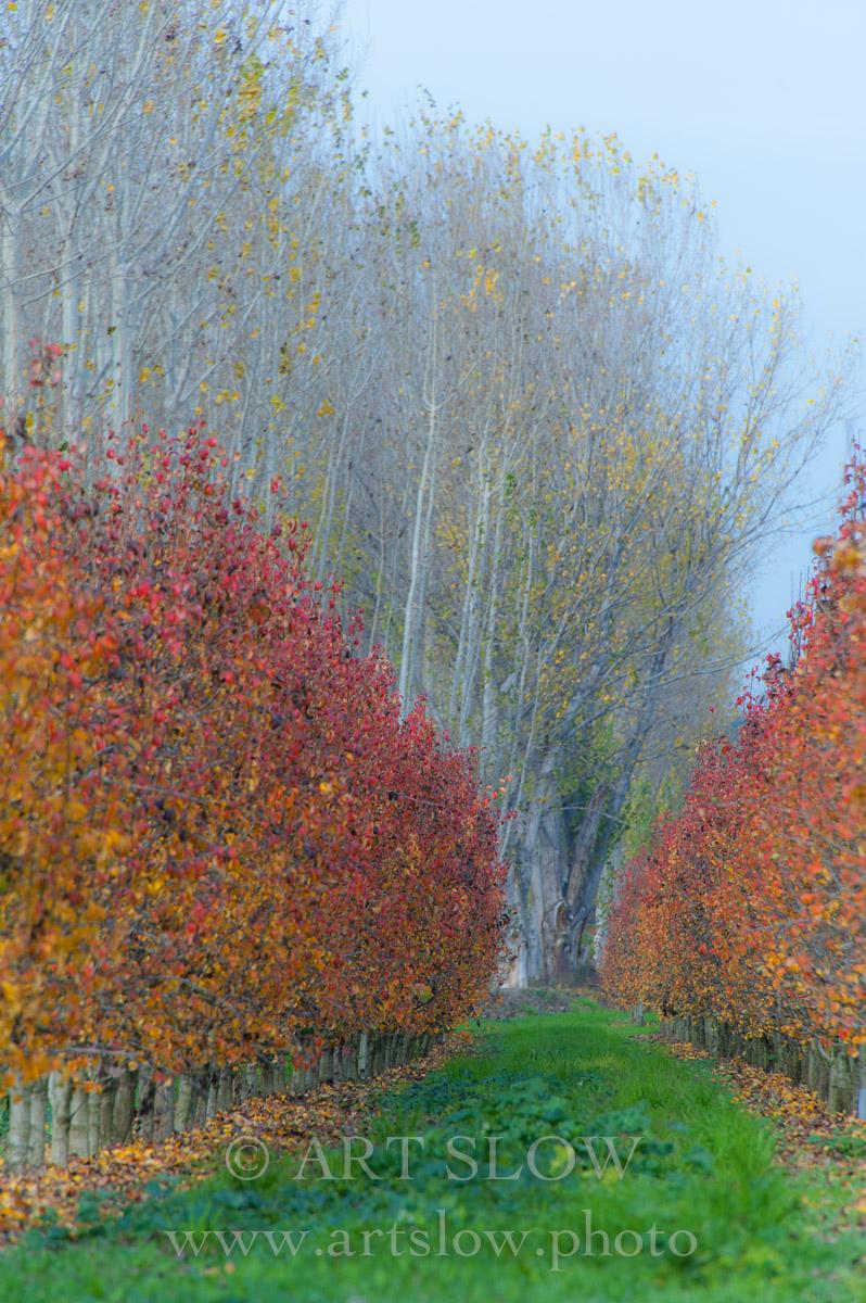 Poesía de la sensación vivida  - Zona Natural de los Aiguamolls de Rufea, Lleida, Catalunya. Edición: 10/10 + 2P/A - Arboles - Arboles