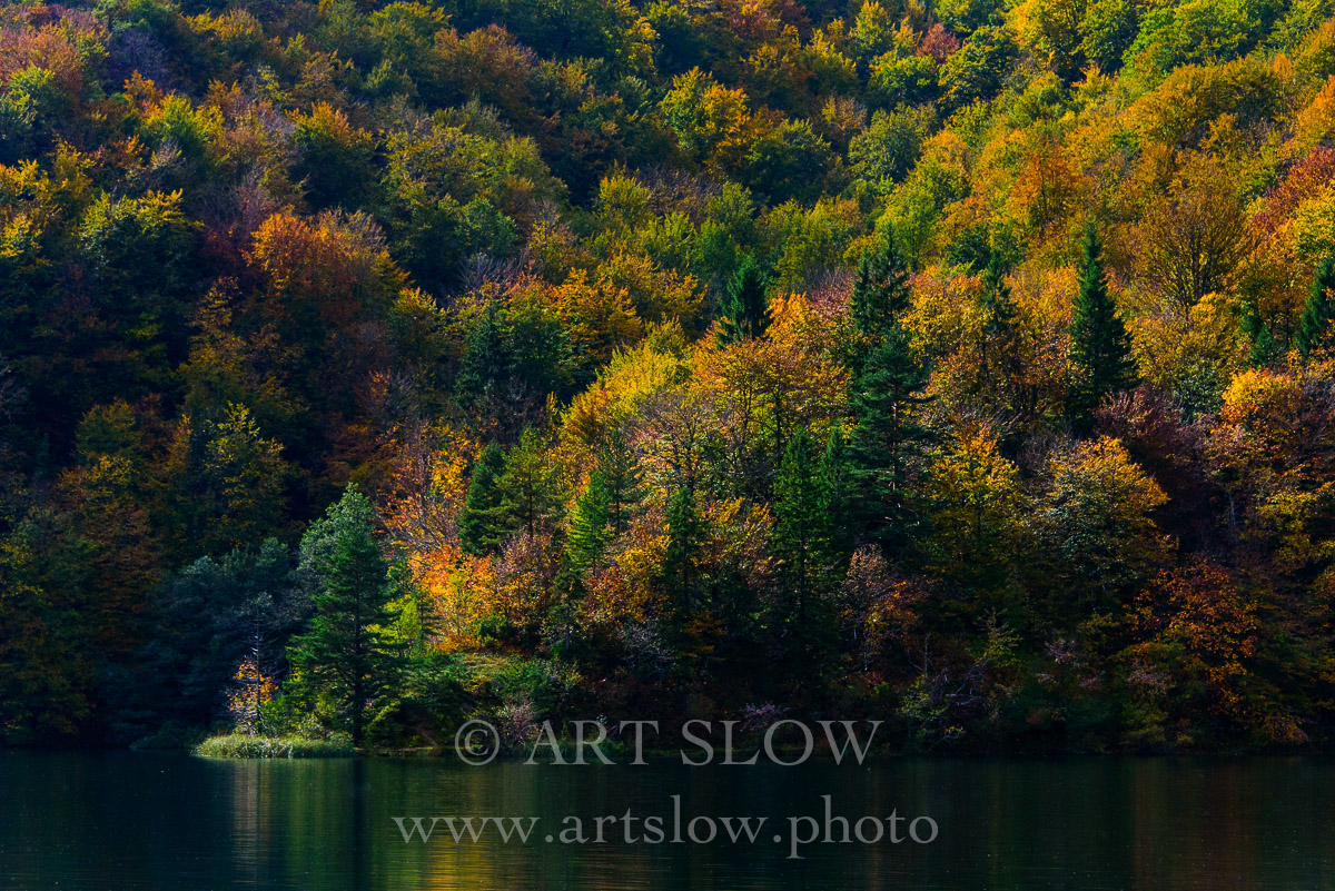 Sinfonía de colores de Otoño- Parque Nacional de los Lagos de Plivitce, Croacia. Edición: 10/10 + 2P/A - Arboles - Arboles