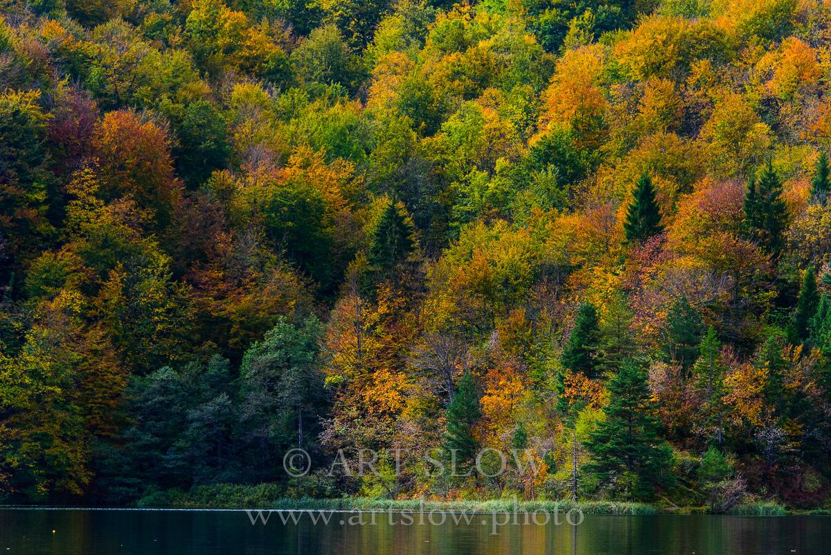 Compitiendo por la Luz - Parque Nacional de los Lagos de Plivitce, Croacia. Edición: 10/10 + 2P/A - Arboles - Arboles