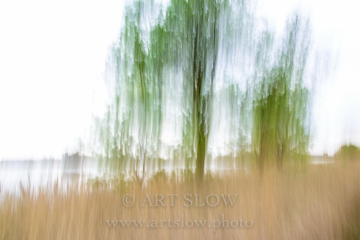 Trazos verdes - Mig de dos rius, Sant Pere Pescador, Parc Natural dels Aiguamolls de l'Empordà, Girona, Catalunya. Edición: 10/10 + 2P/A - Arboles - Arboles