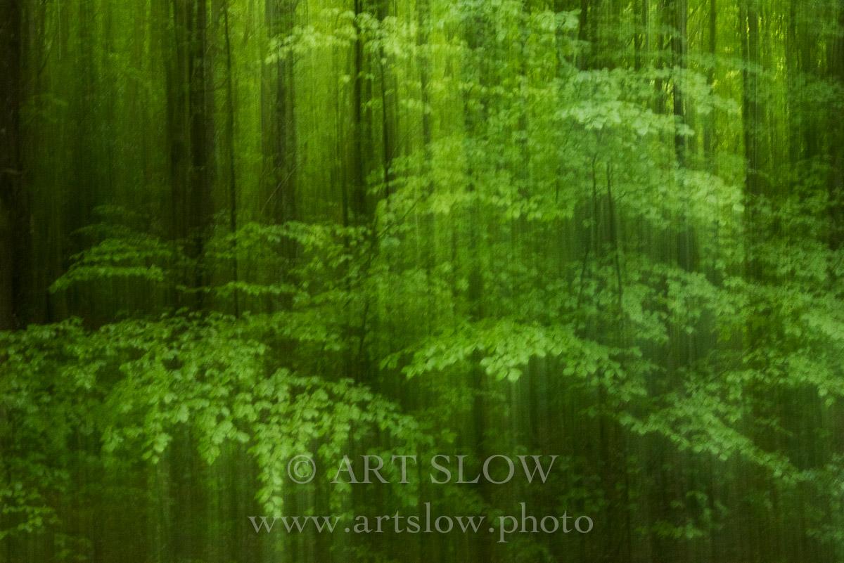 Velo de luz - Parque Nacional Hoge Veluwe, Holanda. Edición: 10/10 + 2P/A - Arboles - Arboles