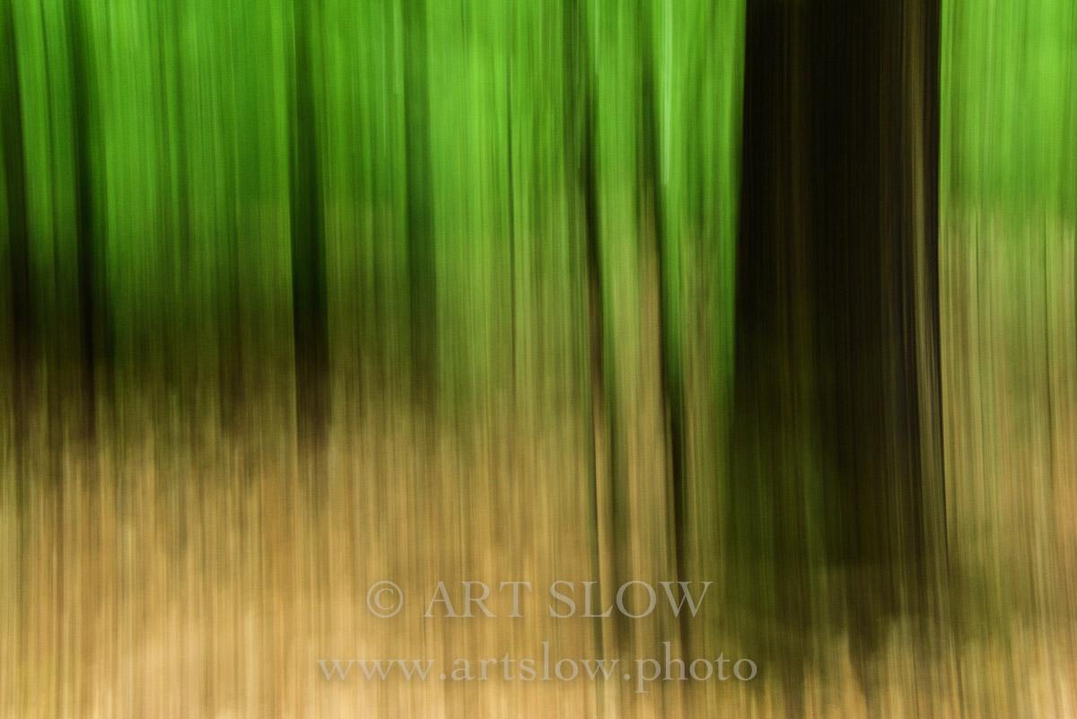 Ecosistema Integrado - Parque Nacional Hoge Veluwe, Holanda. Edición: 10/10 + 2P/A - Arboles - Arboles