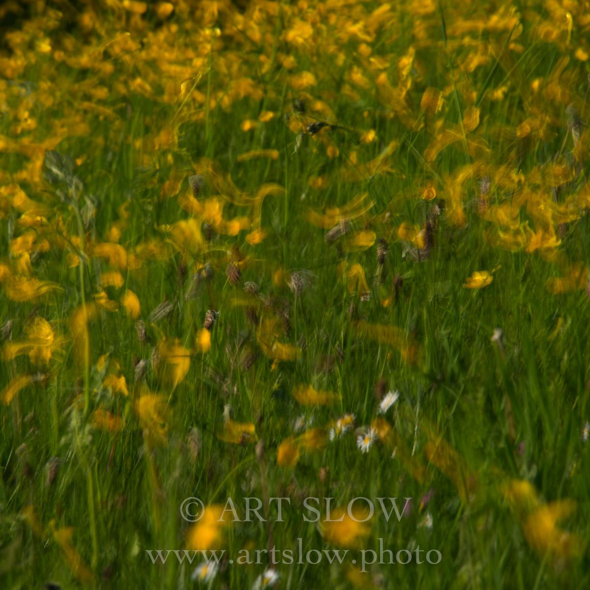 Fluir ventoso - Wageningen, Holanda. Edición: 10/10 + 2P/A - Flores y Plantas - Flores y Plantas