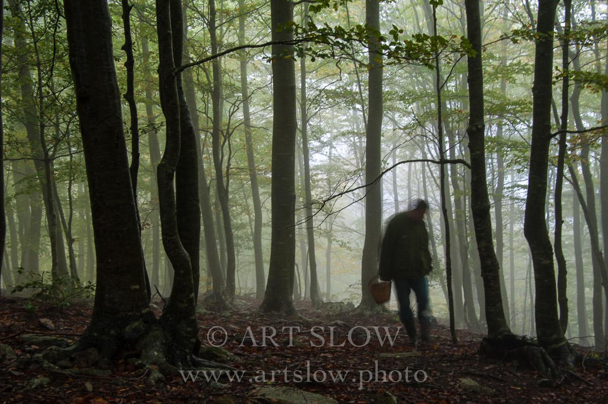 Setas, Parque Natural del Montseny,  Catalunya. Edición: 10/10 + 2P/A - Paisaje Humano Slow - Paisaje Humano