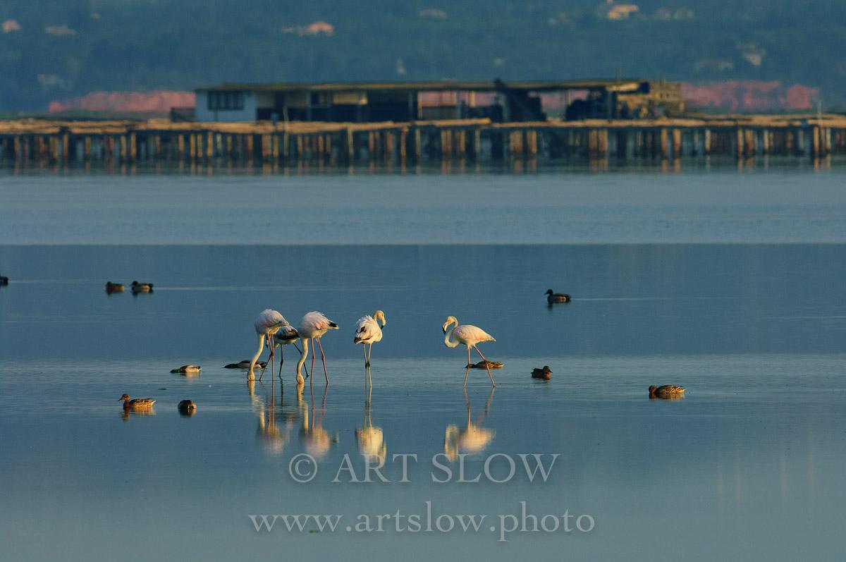 Hálito de Vida - Bahía del Fangar, Reserva Natural del Delta del Ebro, Catalunya. Edición: 10/10 + 2P/A - Lo Fangar - Bahía del Fangar