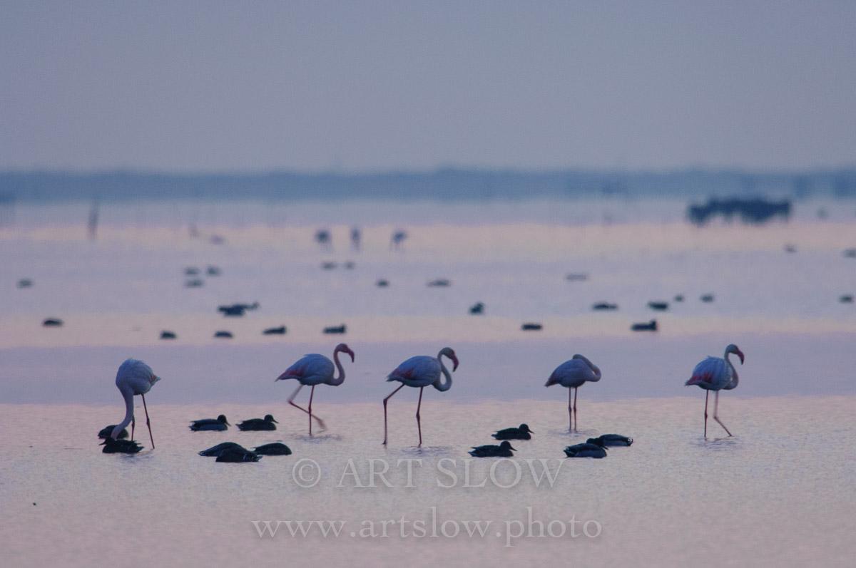 Te hecho de menos - Bahía del Fangar, Reserva Natural del Delta del Ebro, Catalunya. Edición: 10/10 + 2P/A - Lo Fangar - Bahía del Fangar