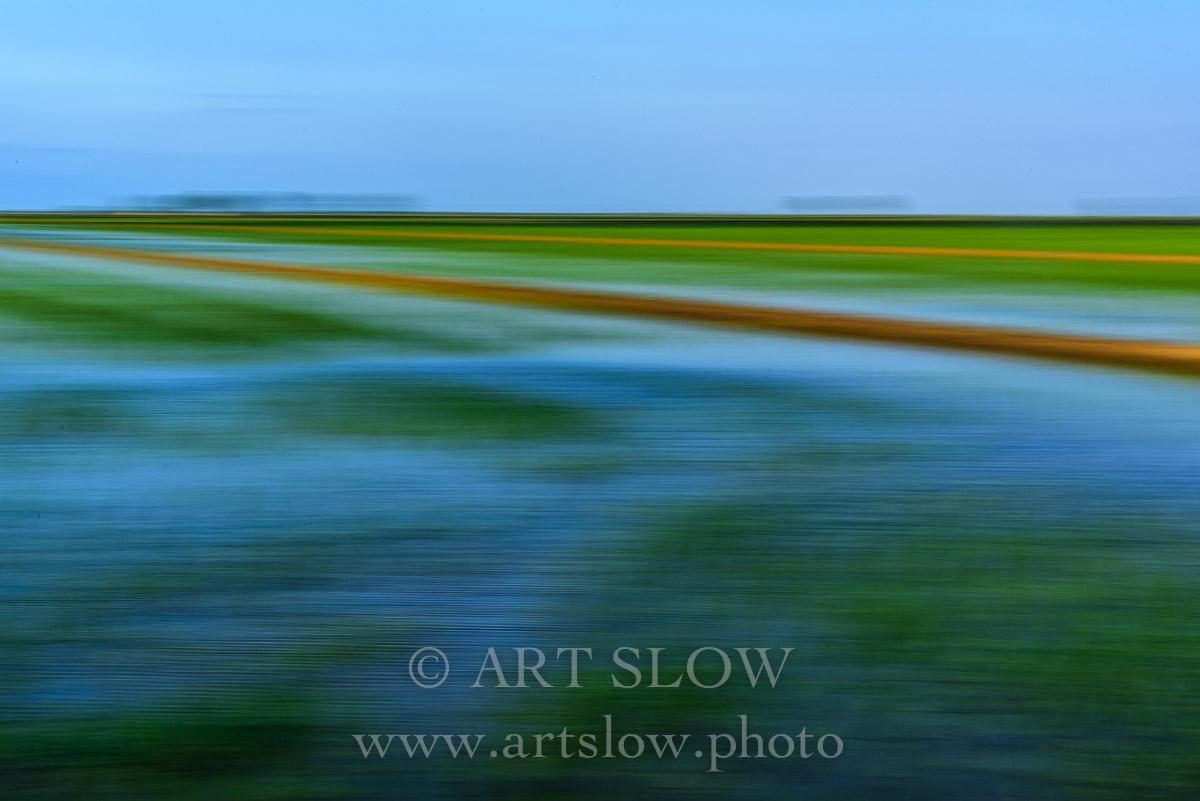 Verde brota el arroz - Delta del Ebro, Tarragona, Catalunya. Edición: 10/10 + 2P/A - Paisaje Slow - Paisajes Relajantes