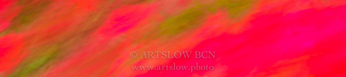 Bcn rosas fucsias; Ref: 1604-0859 - Bcn rosas fucsias - Foulard Bcn fucsias