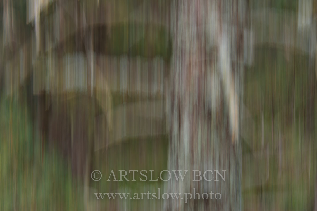 1708-3947 - 2017 - ARTSLOW BCN GALLERY SHOP, www.artslow.photo