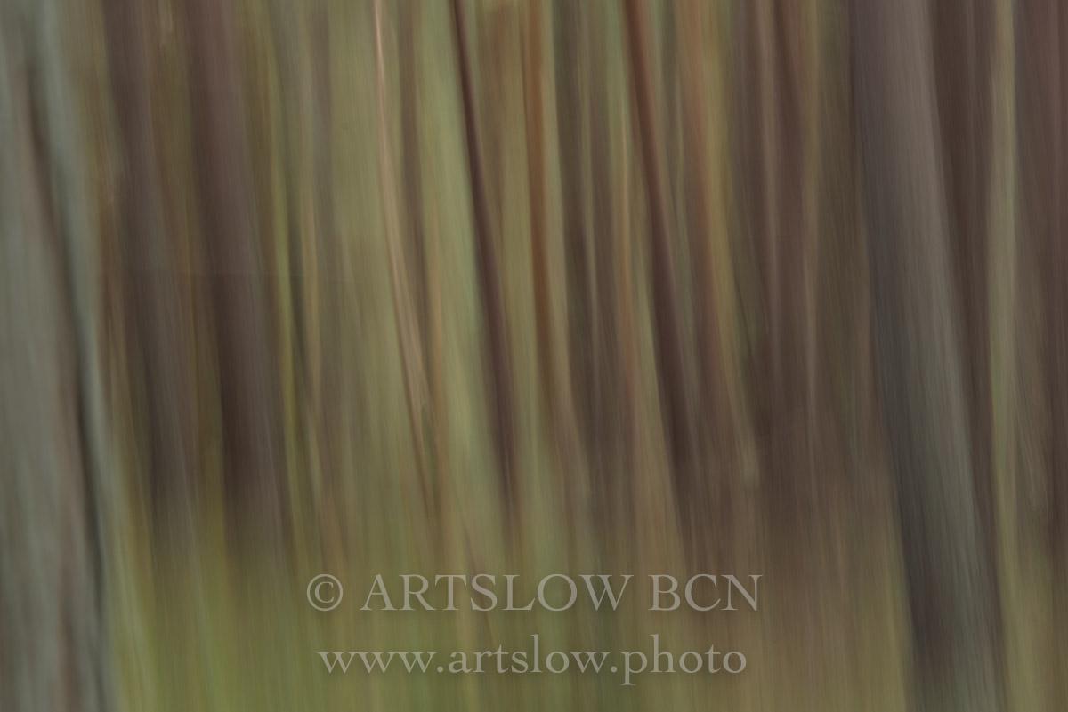 1708-4098 - 2017 - ARTSLOW BCN GALLERY SHOP, www.artslow.photo
