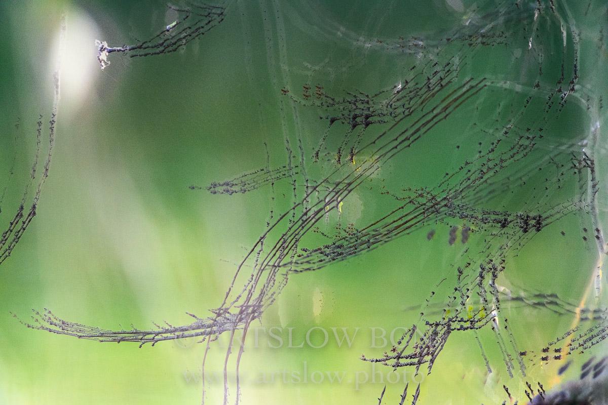 1812-3451 - 2018 - ARTSLOW BCN GALLERY SHOP, www.artslow.photo