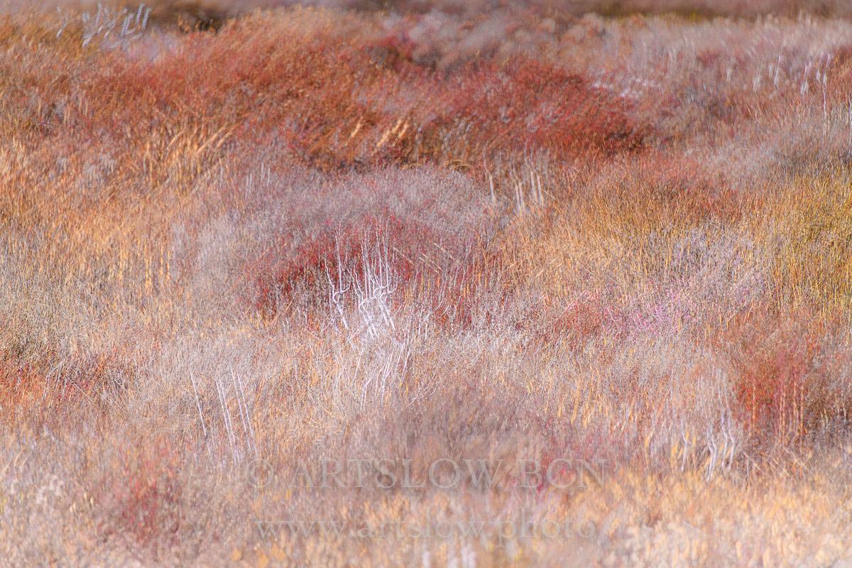 1901-5667 - 2019 - ARTSLOW BCN GALLERY SHOP, www.artslow.photo
