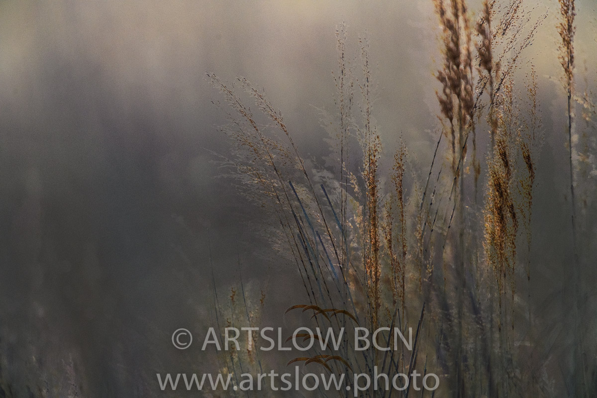 1903-0174 - 2019 - ARTSLOW BCN GALLERY SHOP, www.artslow.photo