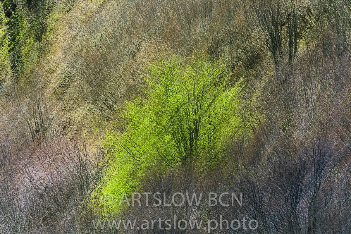 1904-5441 - 2019 - ARTSLOW BCN GALLERY SHOP, www.artslow.photo