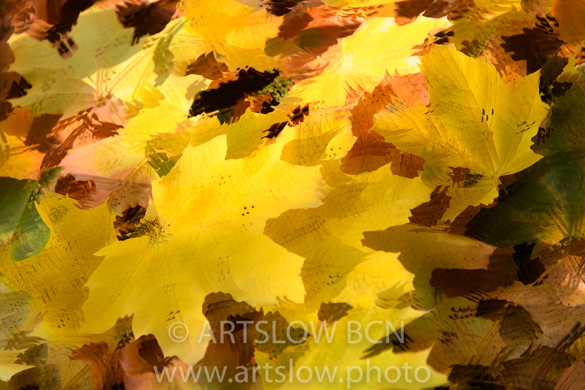 1911-3260 - 2019 - ARTSLOW BCN GALLERY SHOP, www.artslow.photo