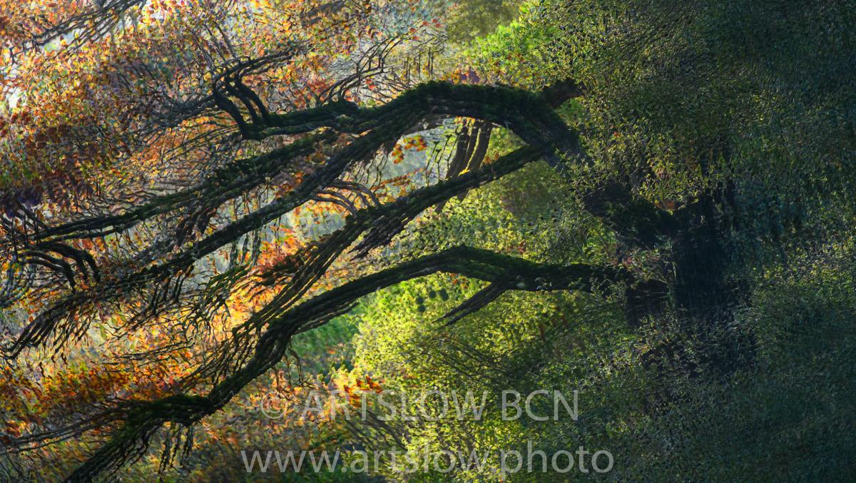 1912-4863 - 2019 - ARTSLOW BCN GALLERY SHOP, www.artslow.photo