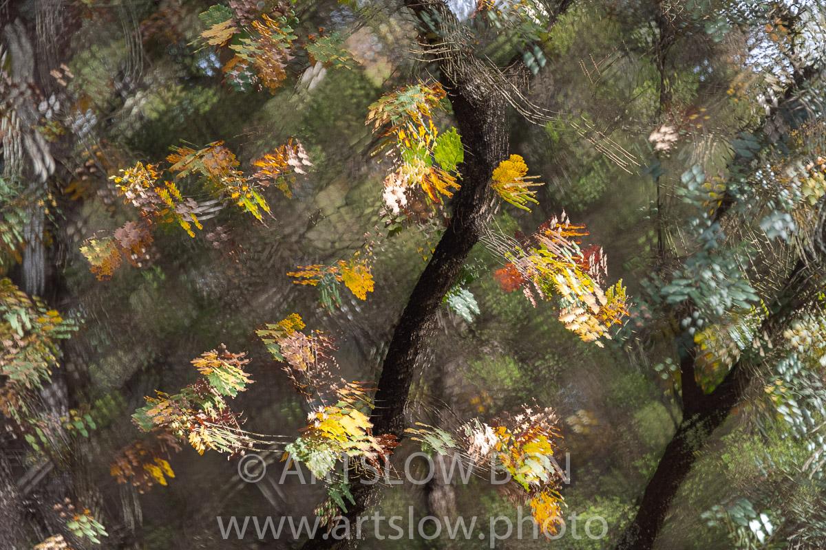 1912-5159 - 2019 - ARTSLOW BCN GALLERY SHOP, www.artslow.photo