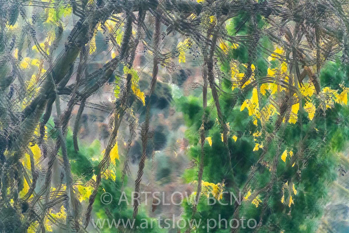 1912-5233 - 2019 - ARTSLOW BCN GALLERY SHOP, www.artslow.photo
