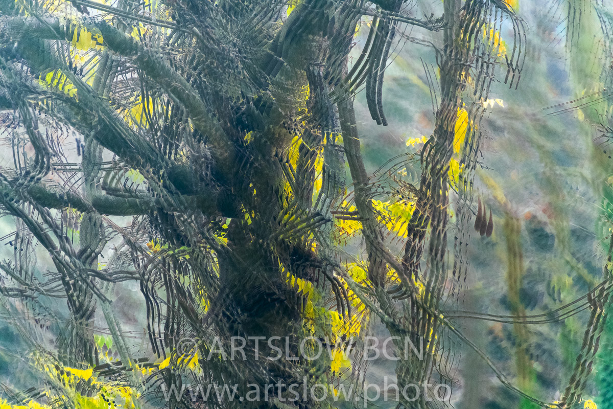 1912-5246 - 2019 - ARTSLOW BCN GALLERY SHOP, www.artslow.photo