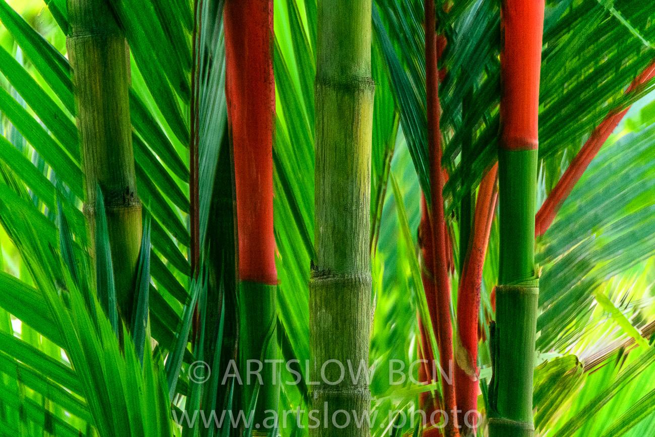 2002-8234- Palma roja, (Cyrtostachys renda), lago Gatún, Panamá - Paisajes Tropicales - ARTSLOW BCN GALLERY SHOP, www.artslow.photo