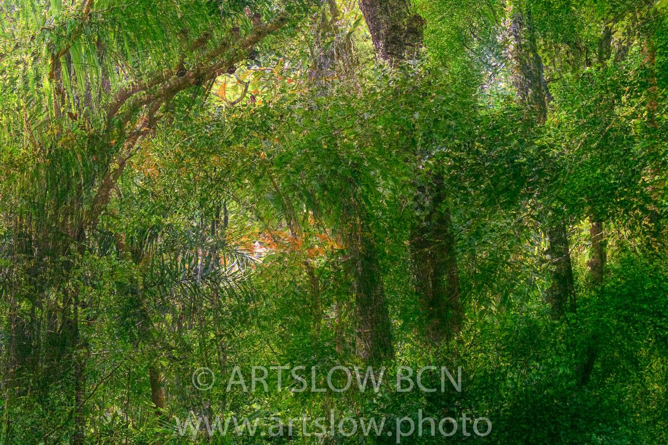 2002-8235-Jungla, Parque metropolitano Panamá - Paisajes Tropicales - ARTSLOW BCN GALLERY SHOP, www.artslow.photo