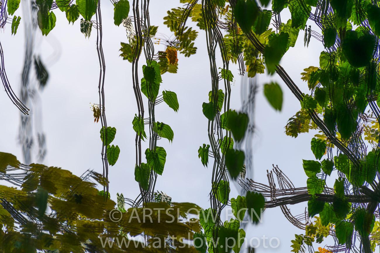 202-8469-Ramillete de Corazones,lago Gatún, Panamá - Paisajes Tropicales - ARTSLOW BCN GALLERY SHOP, www.artslow.photo