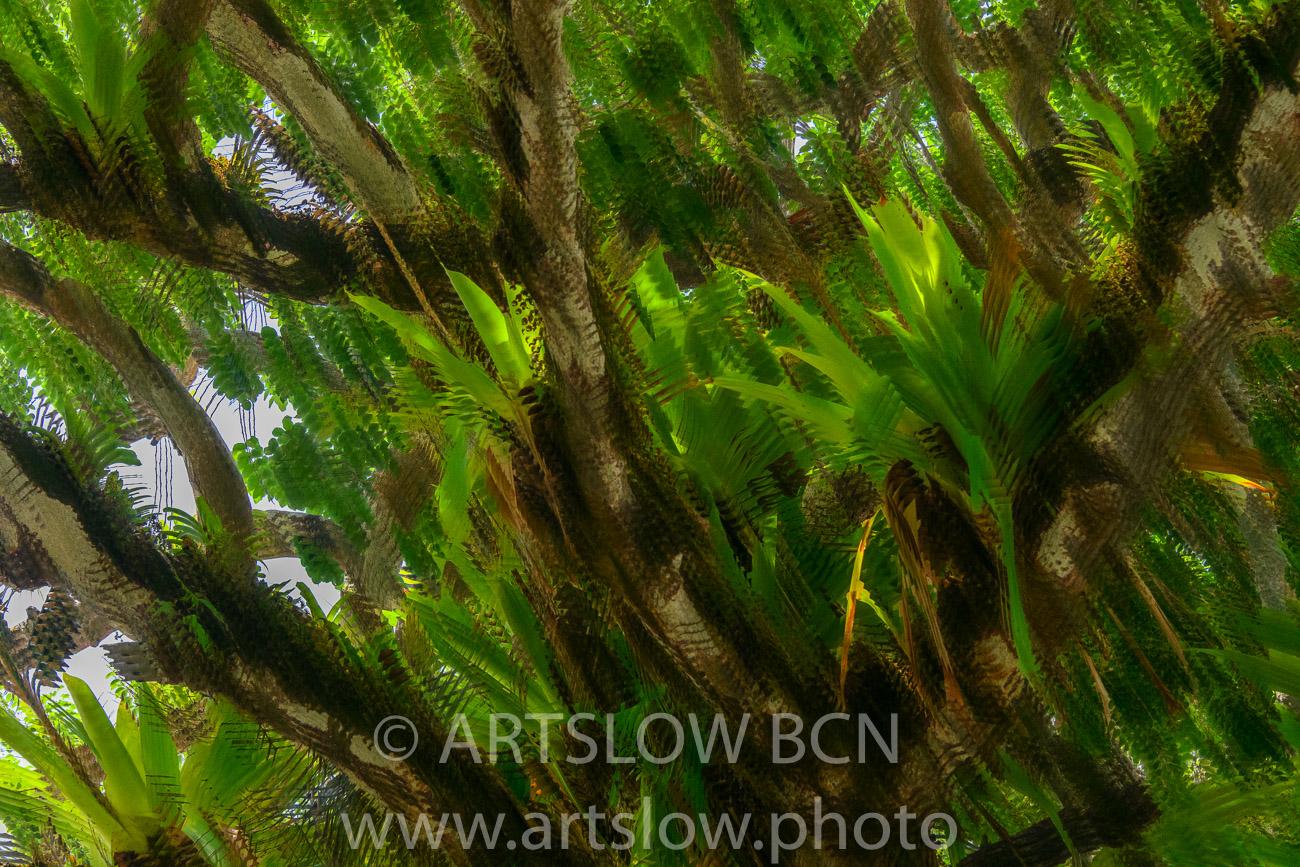 2002-8529- Epífitas, Canal de Panamá - Paisajes Tropicales - ARTSLOW BCN GALLERY SHOP, www.artslow.photo