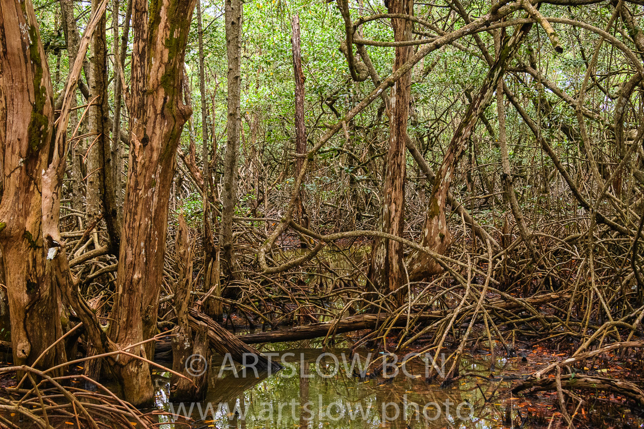 2002-9065-Manglar Rojo1, Bocas del Toro,Isla de Colón, Panamá - Paisajes Tropicales - ARTSLOW BCN GALLERY SHOP, www.artslow.photo